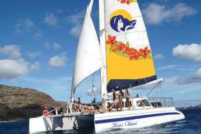 Turtle Snorkel Sail